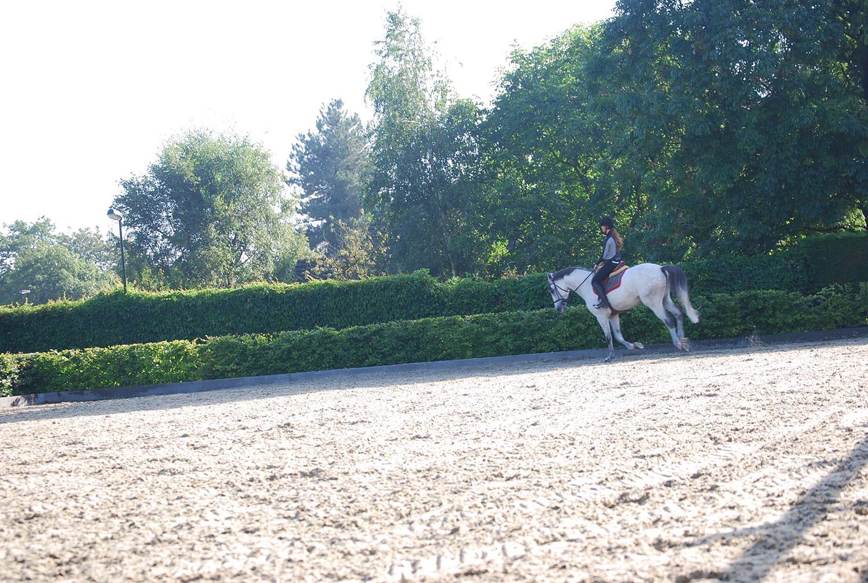 paardenbodem, buitenbak, buitenbodem. geopad, springbodem, manegebodem buiten, paardrijbodem, paardenbak, binnenbak, springen, dressuurbak, aanleggen buitenbak, kosten buitenbak